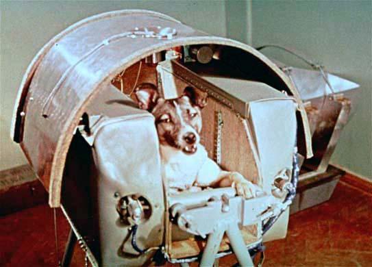 Laika, il primo cane nello spazio, nello Sputnik II