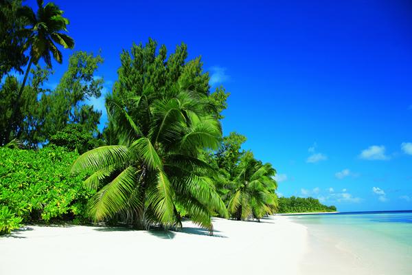 Palme - Seychelles