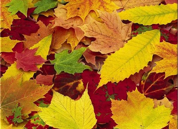 Autunno - foglie ingialliscono