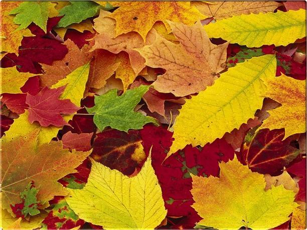 In autunno le foglie ingialliscono