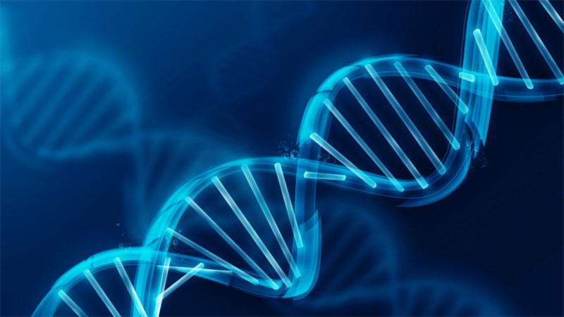 DNA elica
