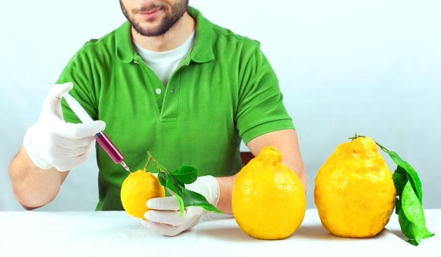 Organismi Geneticamente Modificati: OGM