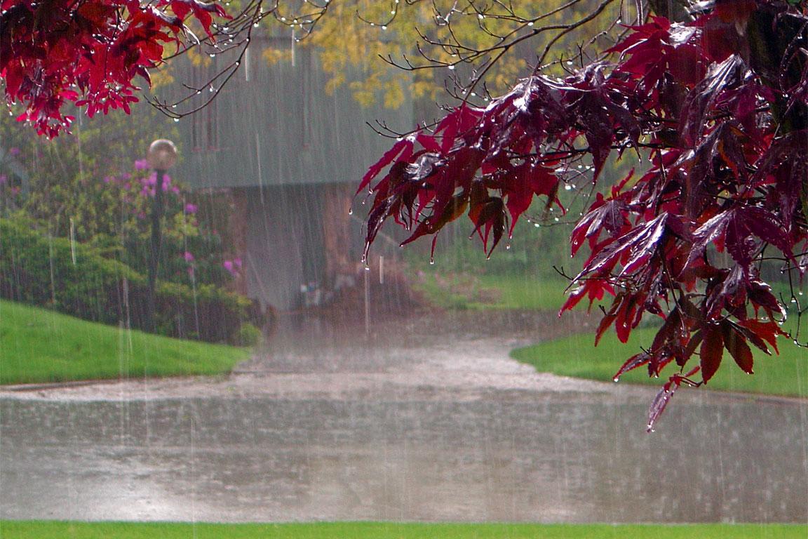 L'olfatto e l'odore di pioggia