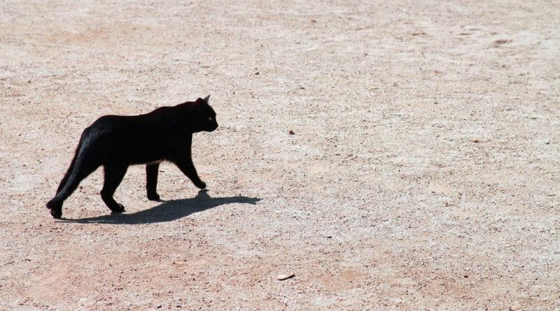 gatto-nero-attraversa-la-strada.jpg