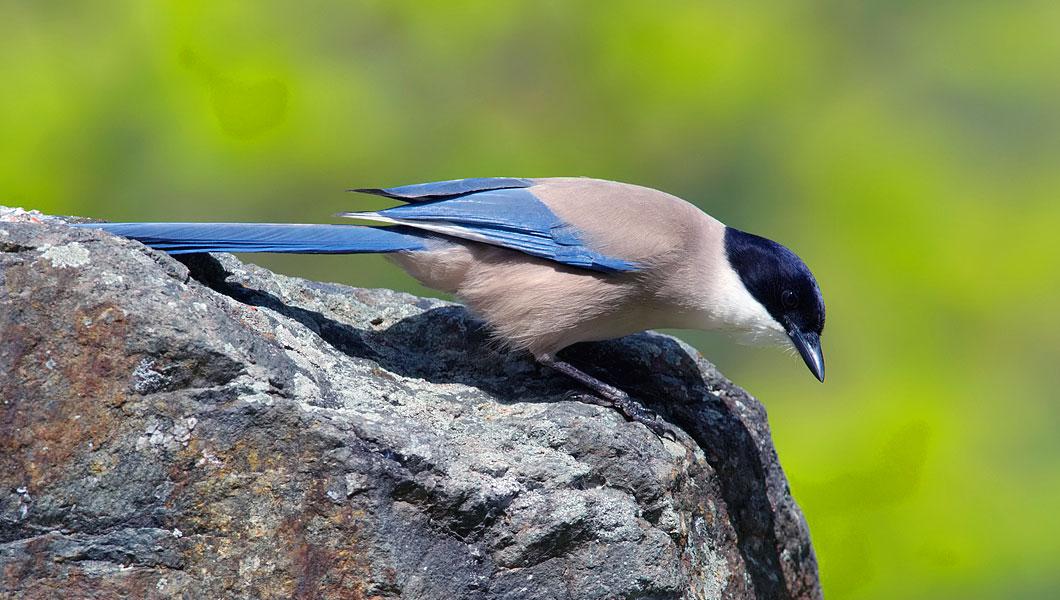 Foto di un passero