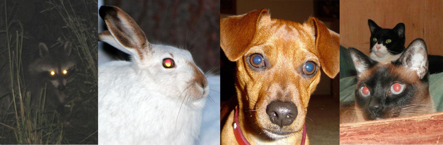 effetto occhi rossi animali