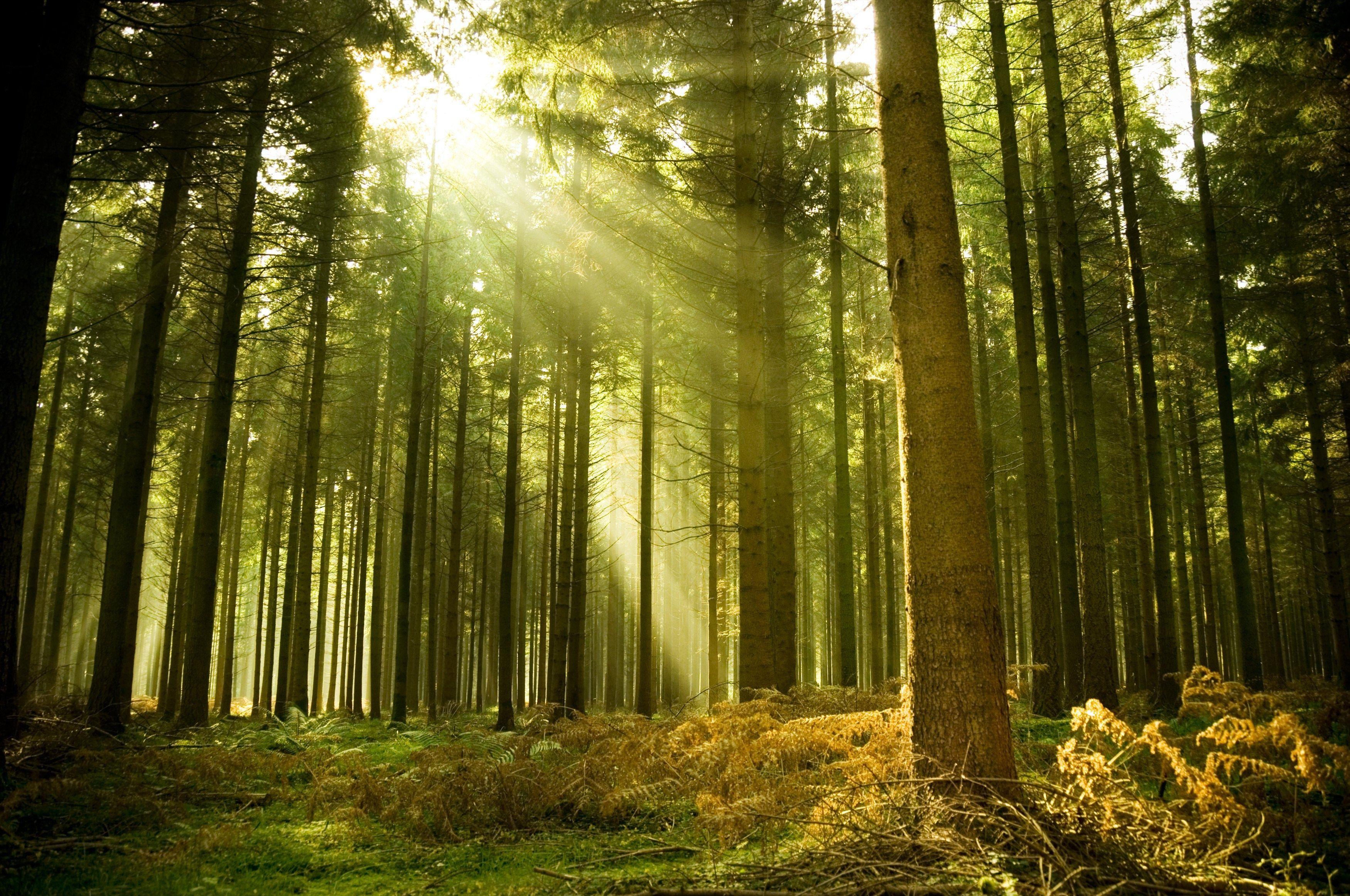 Bosco o foresta?