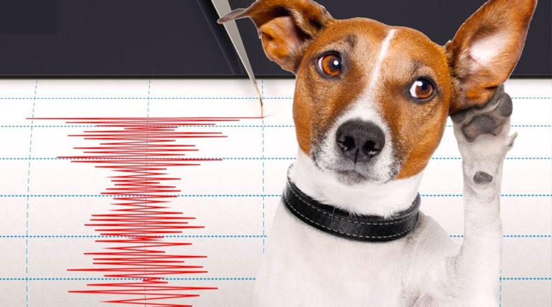 i cani e gli animali sentono i terremoti