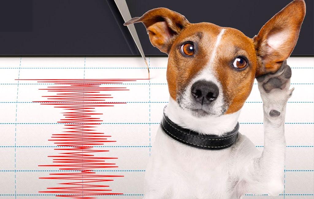 Gli animali sentono prima i terremoti? I cani e gli animali in genere sentono i terremoti prima dell'uomo?
