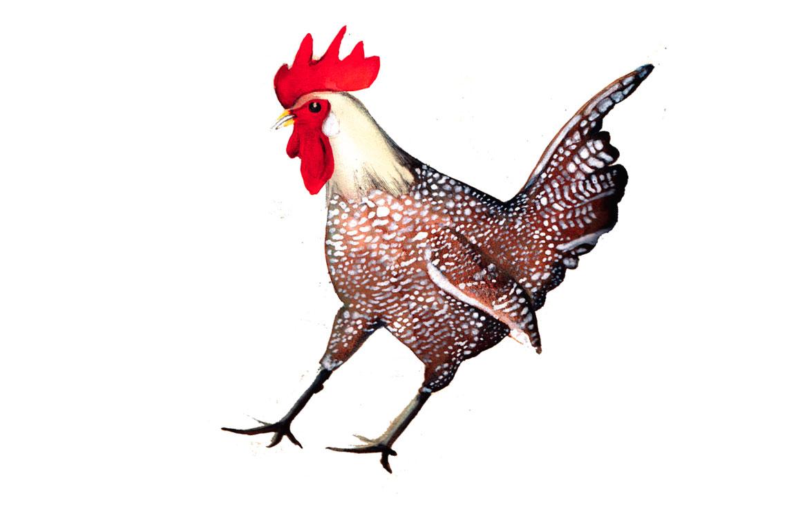 """Vi sono differenze di significato tra i termini """"gallo"""" e """"pollo"""""""