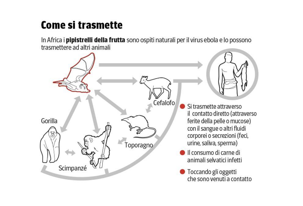 Come si trasmette l'Ebola