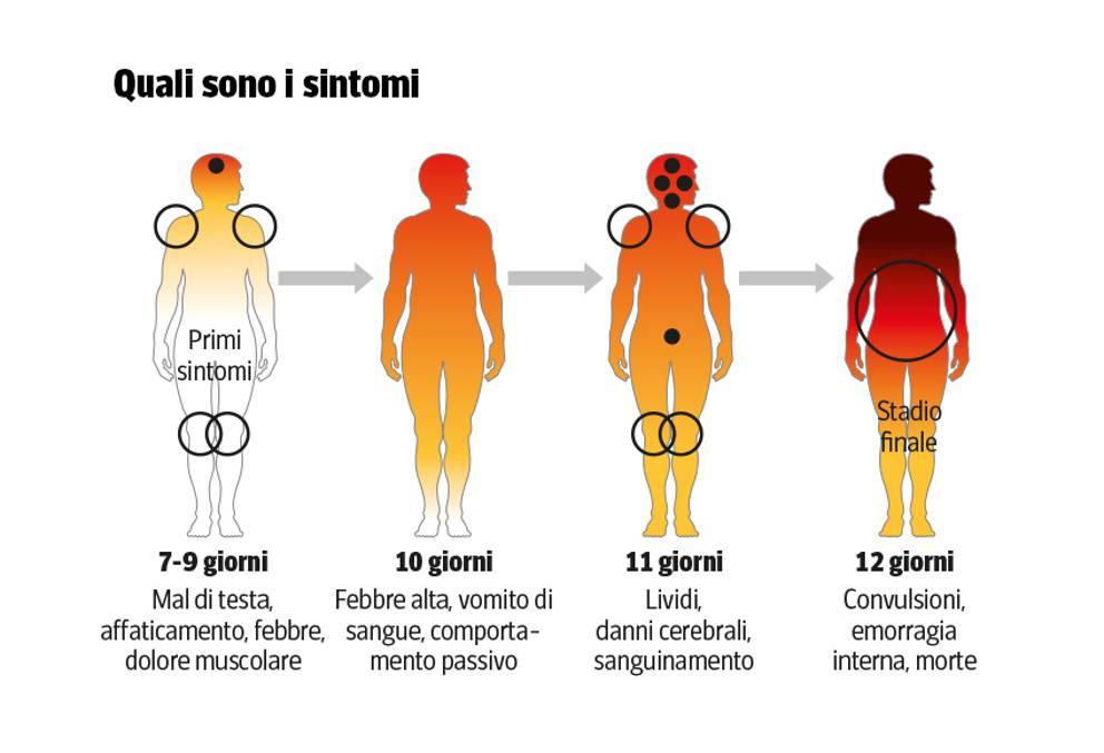 Ebola: i sintomi della malattia sull'uomo