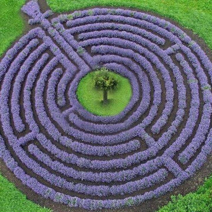 Labirinto di lavanda Kastellaun