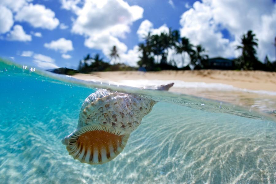 Il rumore del mare e le conchiglie