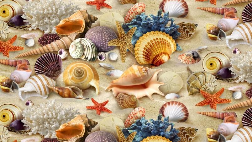 Le conchiglie del mare