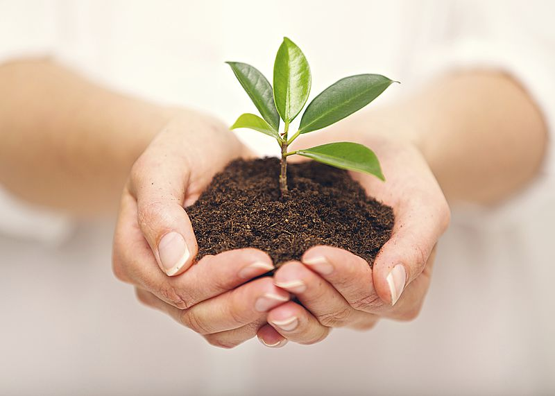 piante fotosintesi