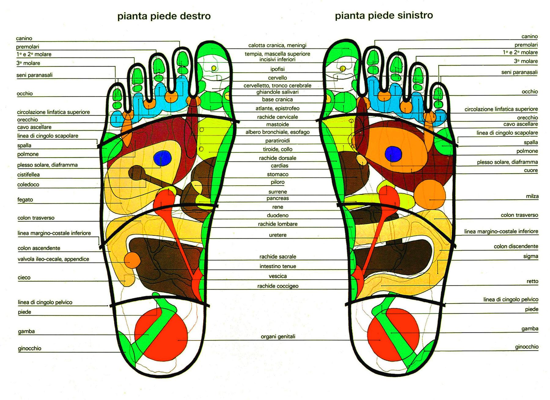 Riflessologia plantare: i punti dei piedi con l'indicazione delle corrispondenze degli organi e delle varie zone del corpo umano