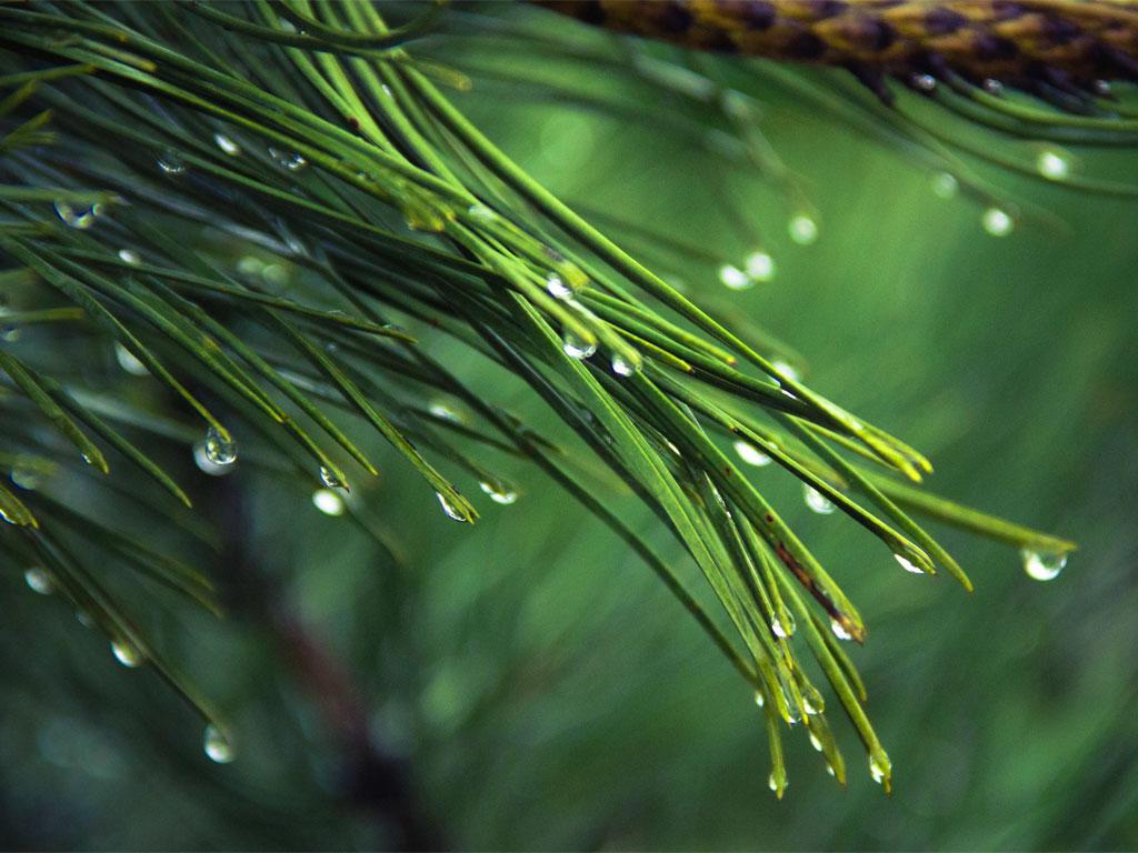 Pioggia nel pineto