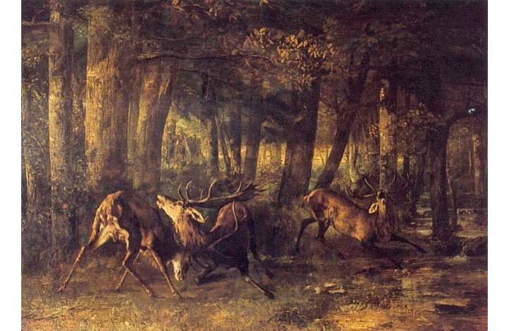 Combattimento di cervi
