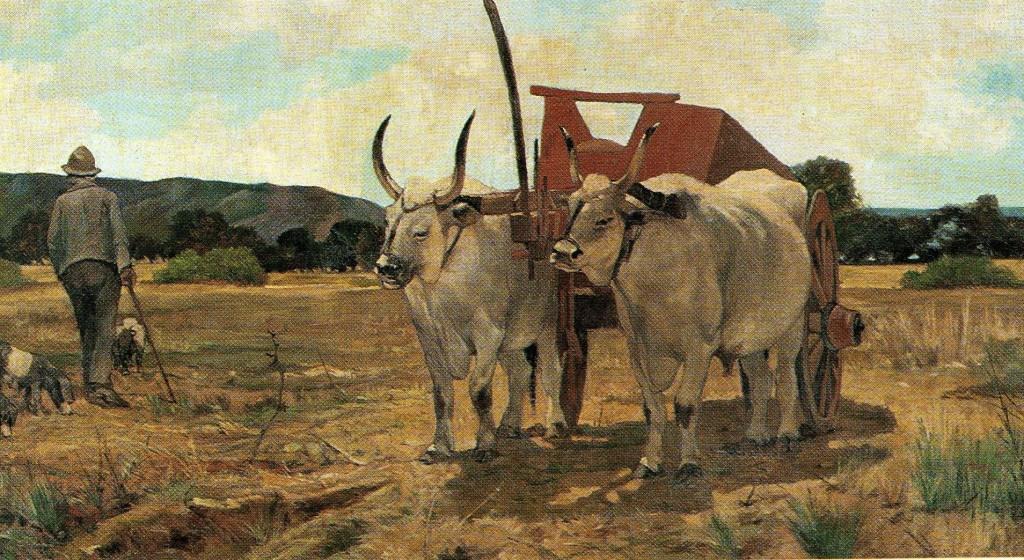 Il bove