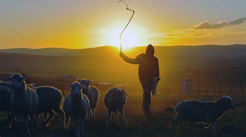 Pastori - Shepherd - Pastore