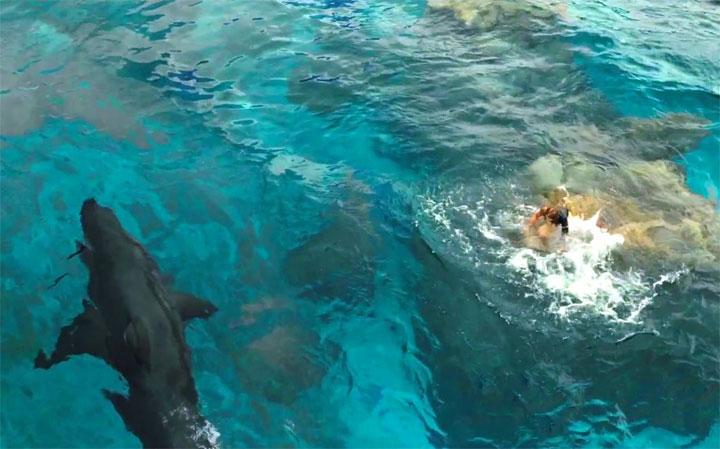 Lo squalo e la ragazza sullo scoglio