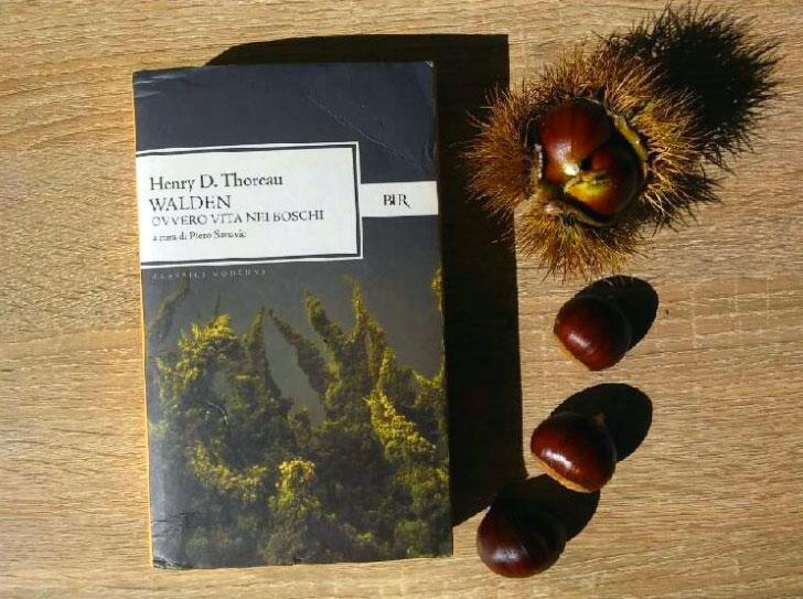 Walden ovvero Vita nei boschi - libro - riassunto