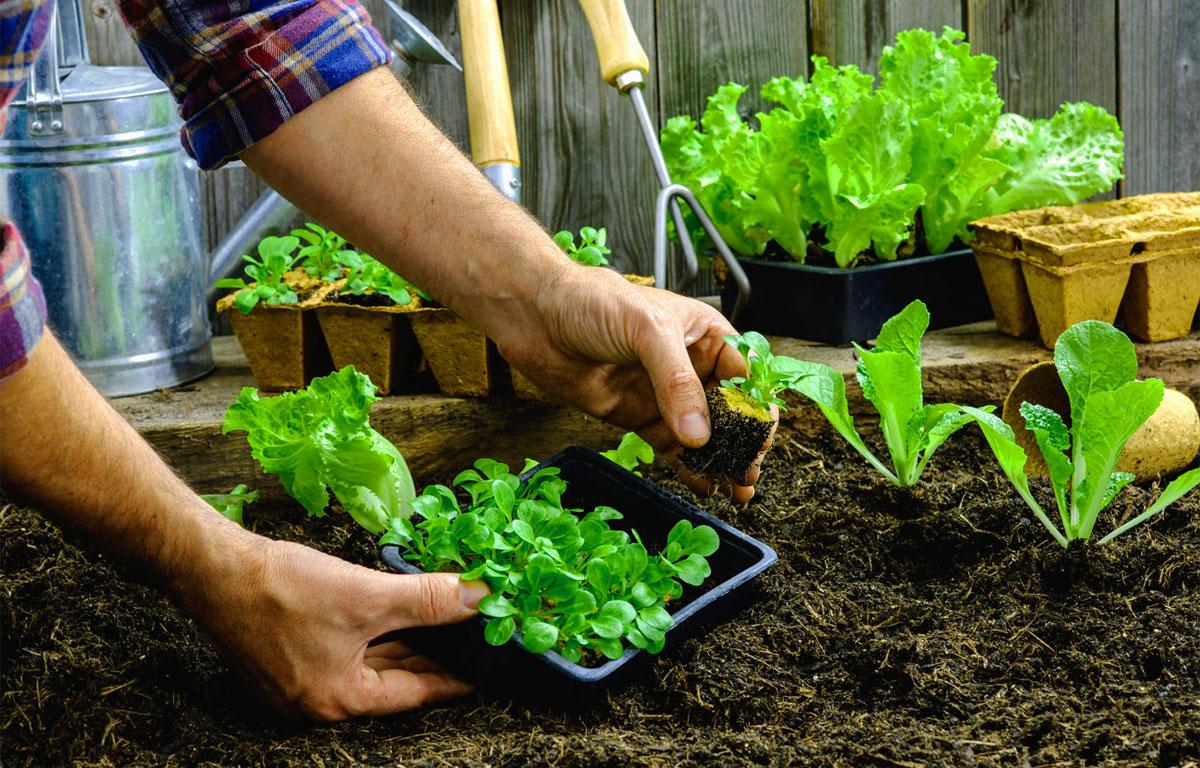 Ortoterapia - Orto - giardino - piante