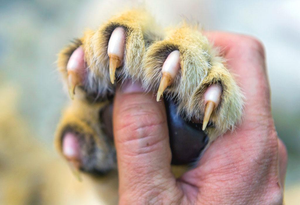unghie artigli unghia artiglio nails claws