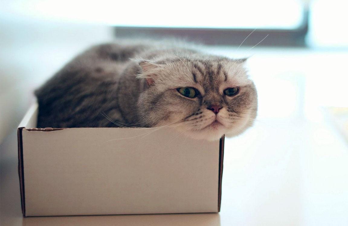 Un gatto tenta di entrare nella scatola. Non centra il suo obiettivo perché non c'entra