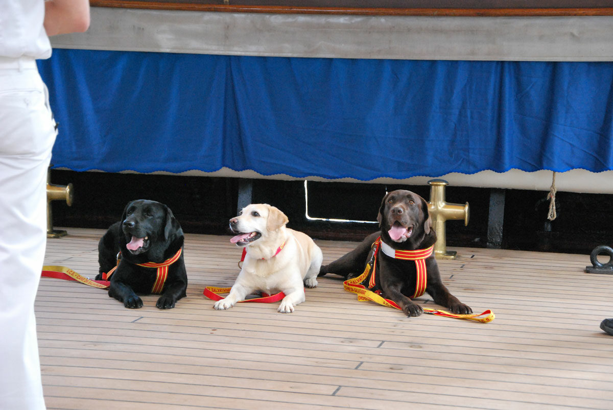 I cani della ACS, l'Associazione Cani di Salvataggio, impegnati a supporto dell'equipaggio.