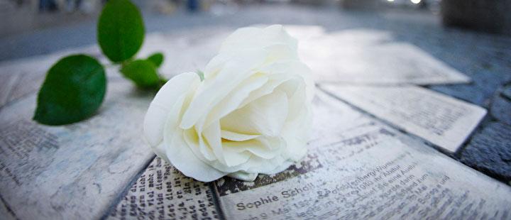 rosa bianca movimento antinazista