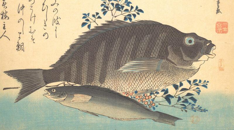 Shimadai Ainame Hiroshige