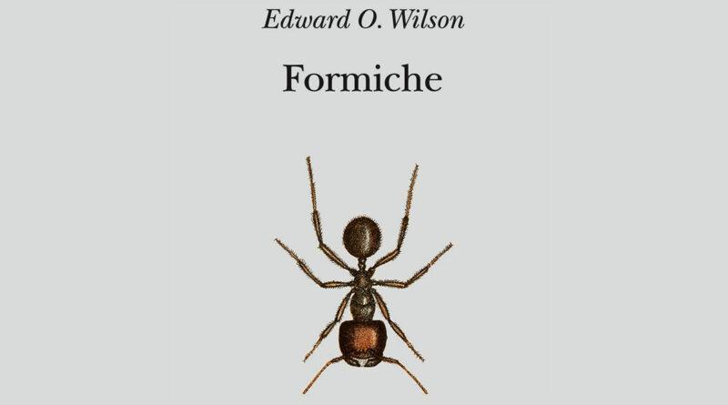 Formiche libro Adelphi