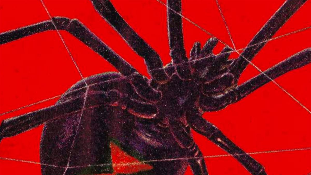 ragno ragnatela mafia